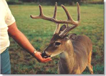 Visitors love the Deer in Texas!